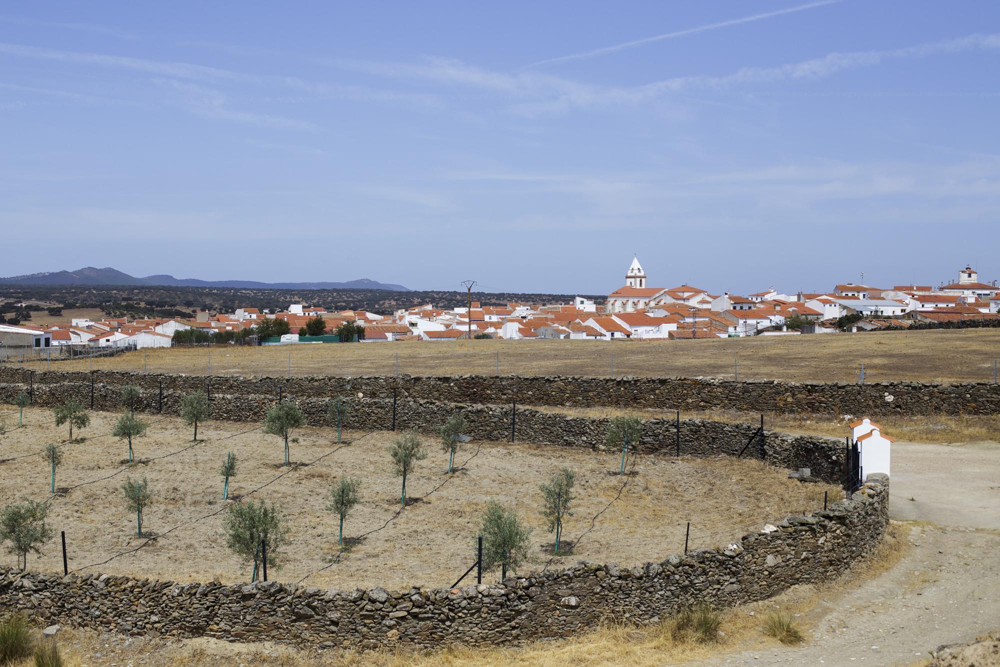 boda-miguel-maria-castillo-piedrabuena (1)